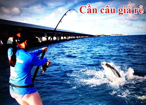 đô câu cá, cần câu cá