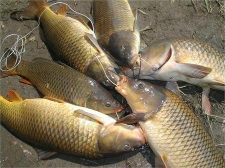 câu cá nước ngọt